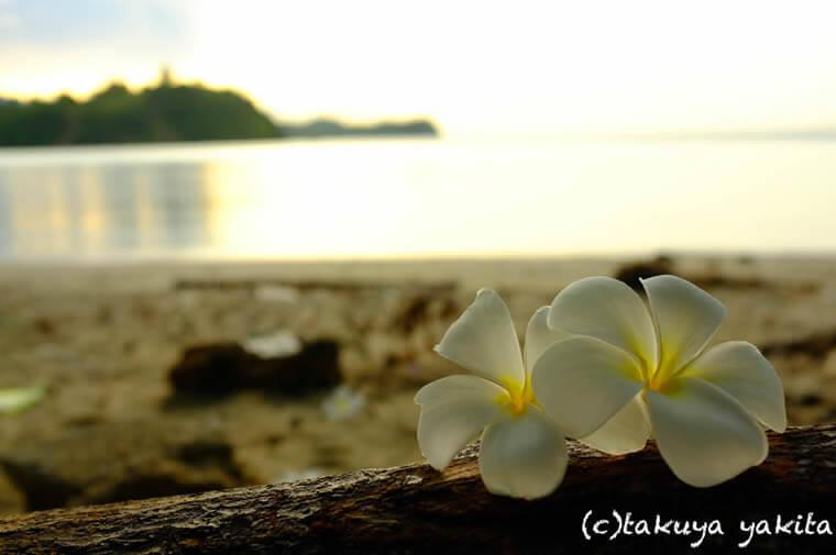 そして足下にはビーチを彩る甘い香りのプルメリア。