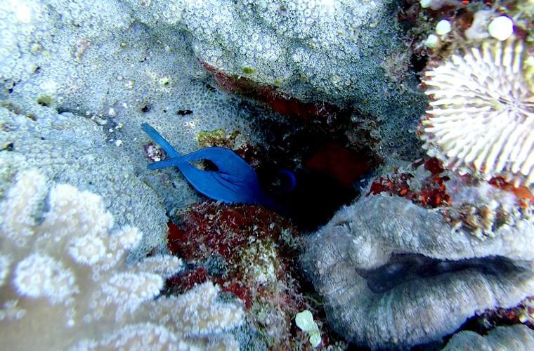 サバンビーチからショート・トリップ!ベルデ島へダイビング!プエルトガレラの海ログ in Verde Island 2015/04/16
