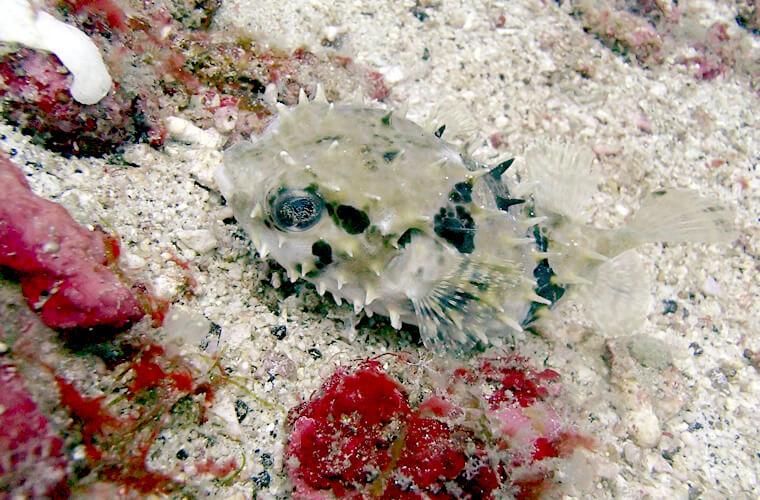 少しずつ暖かくなってきてる?景色も回遊魚も楽しめます。プエルトガレラの海ログ in West Escarsio 2015/04/12