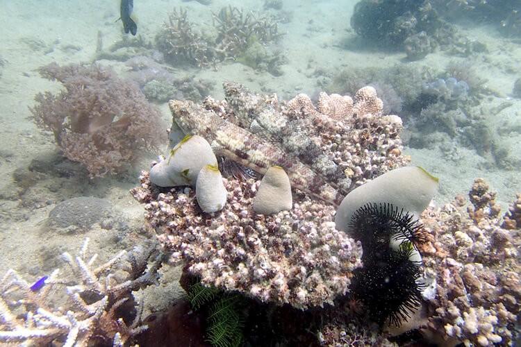 透明度はまだまだ?コブシメ、ピグミーシーホースも!プエルトガレラの海ログ in Kilima Steps 2015/04/03