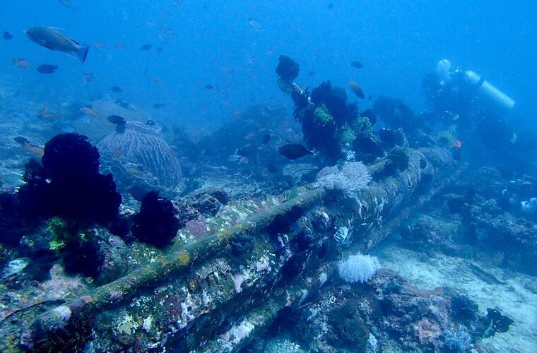 いきものが集まるレックの残骸。大きい船のところではコショウダイ・アカククリがたまっていることも多いです。