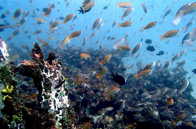 何回も来ていますが飽きません〜サバンレックの沈船の各所にキンギョハナダイが群れています。