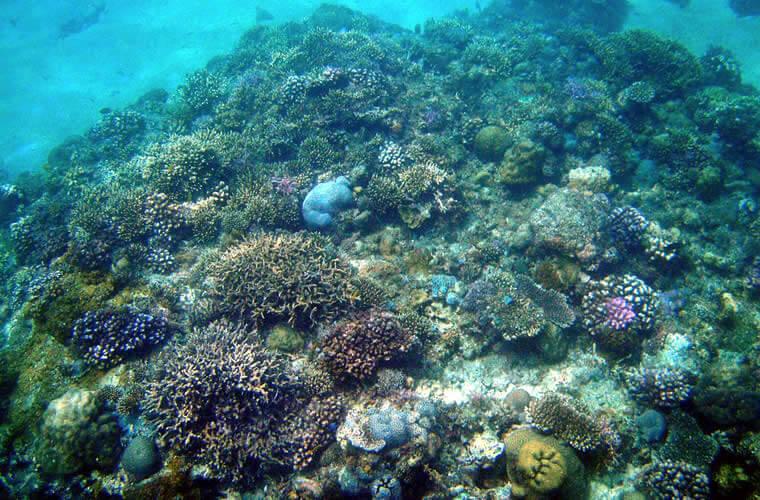 ビーチから直接泳いで見れる珊瑚礁はとってもカラフルで綺麗に育っています!