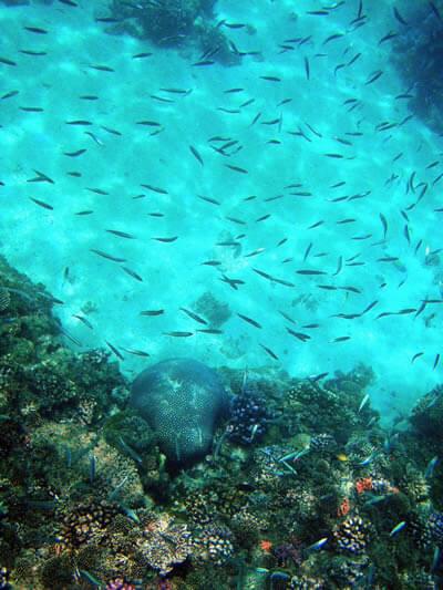 水面からの様子。きれいな魚たちがたくさん!