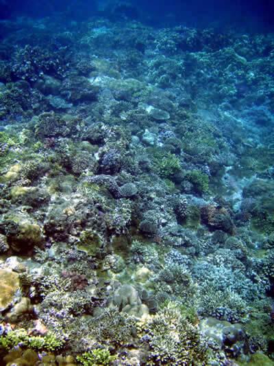 上からみる珊瑚礁はとってもきれい。きれいな海の景色に癒されます。