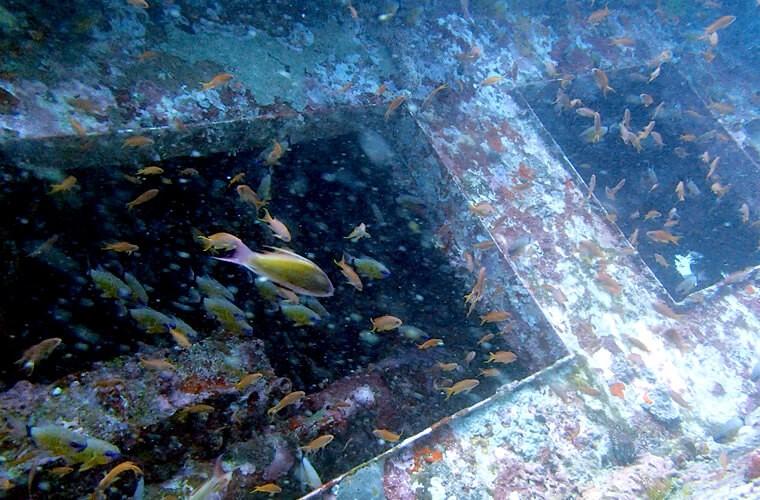 モンキービーチの沈船の様子です。写真より少し手前で沈船内に空気が溜まっています。そーっと入って顔を出すこともできます〜